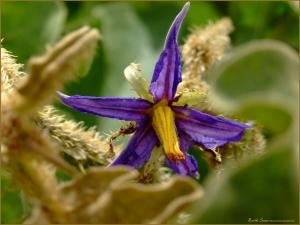 A flor e a náusea