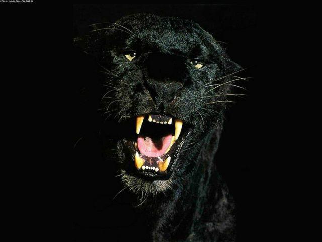 pantera-negra-9dc0a