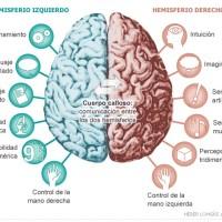 Saiba o que acontece em seu cérebro quando você lê poesia