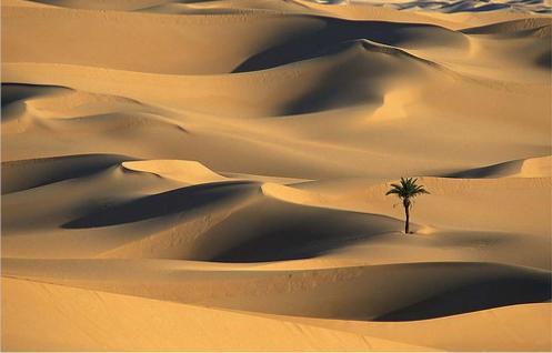 tudo-sobre-o-deserto-do-saara-2