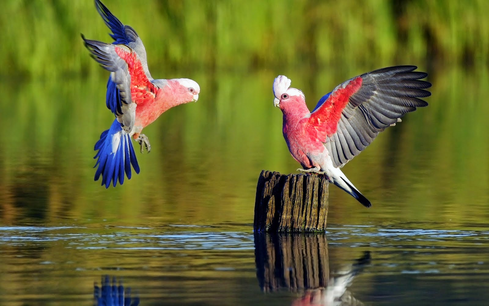 aves exoticas 1